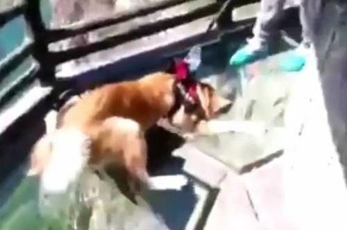02062016-dogafraid1
