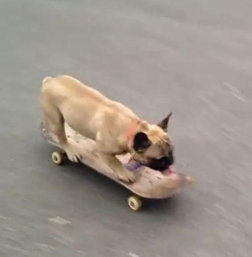 05062016-skateboarding1