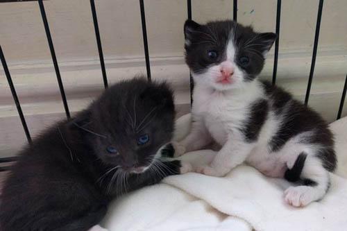 08062016-newbornkittens2
