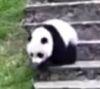 08062016-panda-s