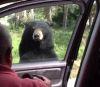 09062016-bear-s