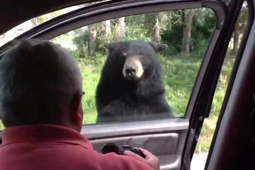 09062016-bear