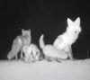 09062016-fox-s