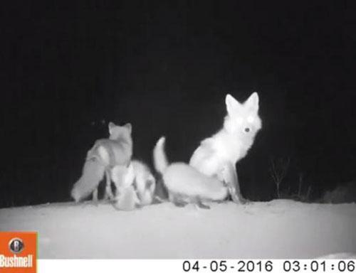 09062016-fox