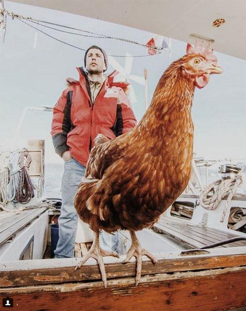 13062016-chicken3