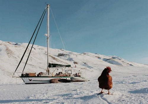 13062016-chicken4
