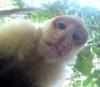 13062016-monkeygopro-s