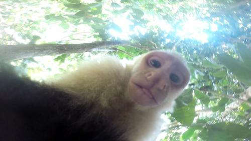 13062016-monkeygopro