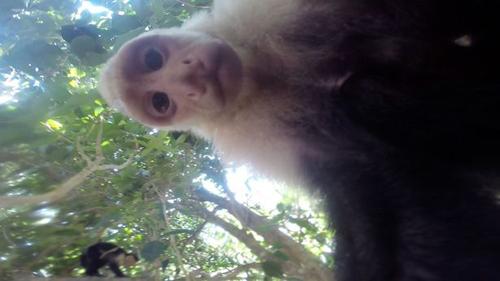 13062016-monkeygopro1