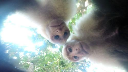 13062016-monkeygopro2