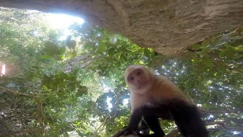 13062016-monkeygopro3