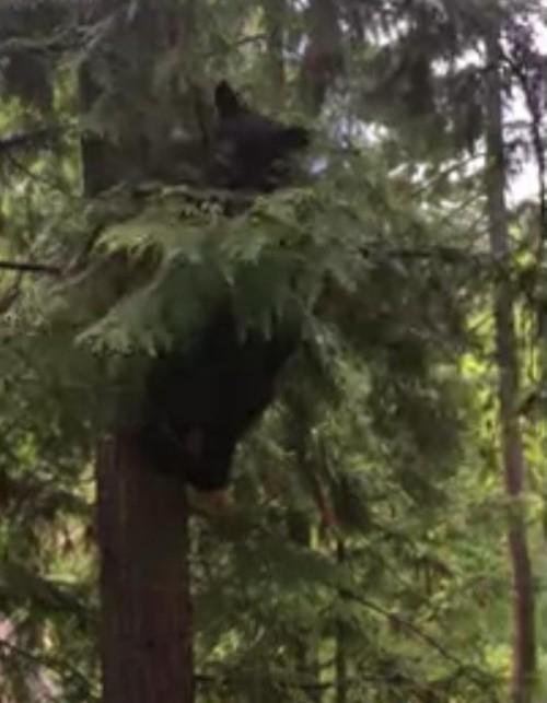 16062016-bear1