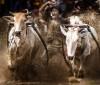 16062016-bulls-s