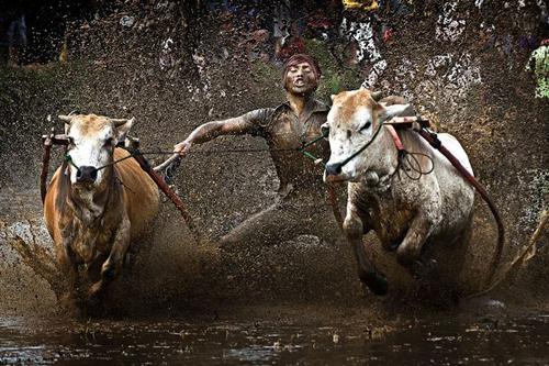 16062016-bulls