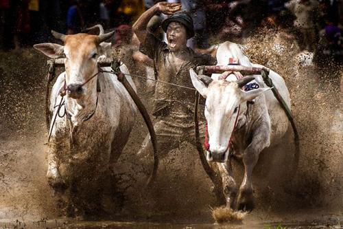 16062016-bulls2