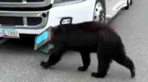 17062016-bearwithcan