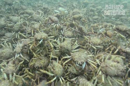 17062016-crabs