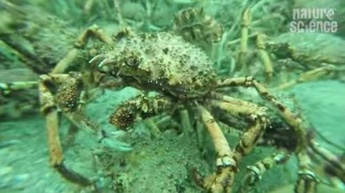 17062016-crabs1