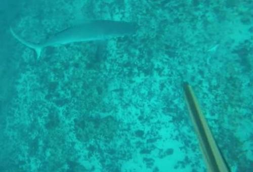 17062016-shark