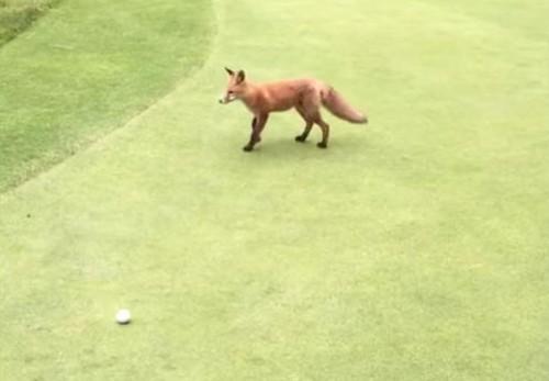 20062016-fox