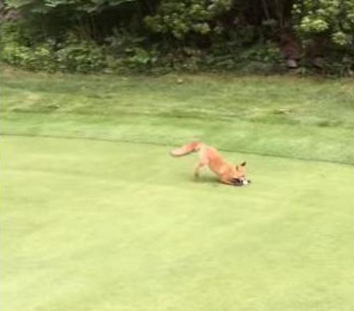 20062016-fox1