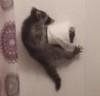 23062016-raccoon-s