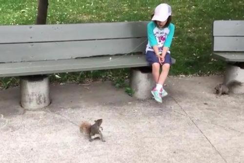 24062016-squirrel1