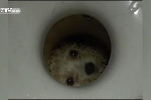 26062016-rescuedog