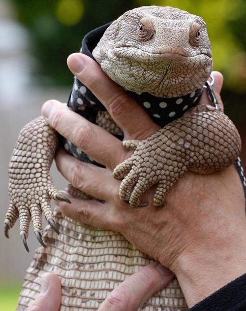 28062016-lizard2