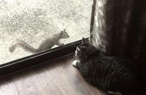 29062016-squirrel