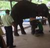 03072016-elephant-s