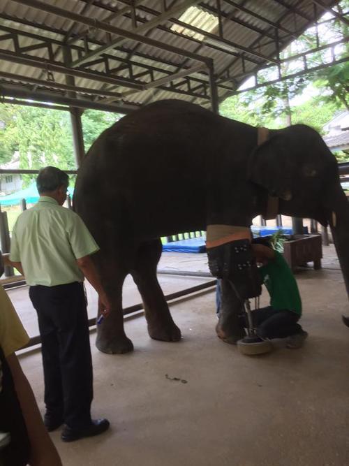 03072016-elephant