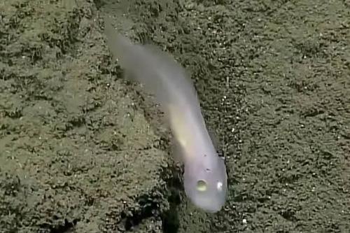 05072016-ghostfish2