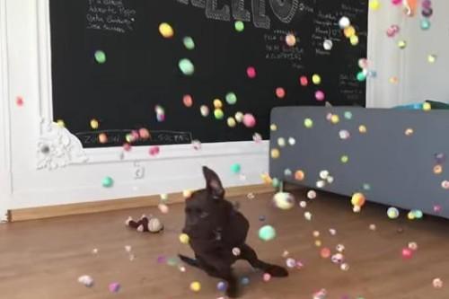 07072016-puppyandballs