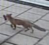 08072016-fox-s