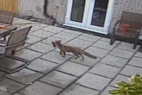 08072016-fox3