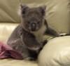 11072016-coala-s