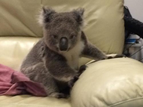 11072016-coala