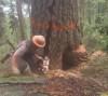 12072016-lumberjack-s
