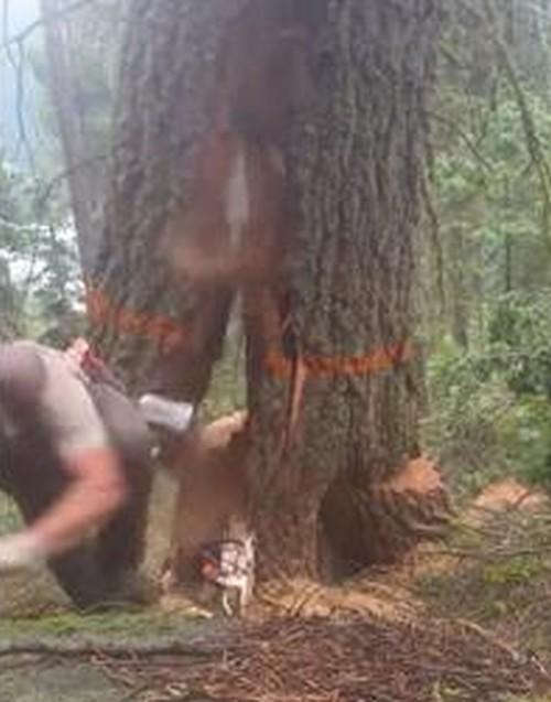 12072016-lumberjack1
