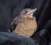 15072016-bird-s