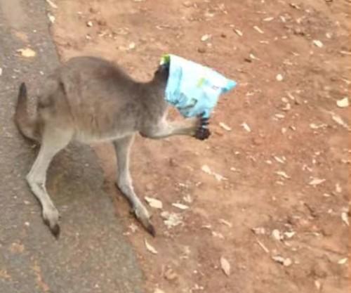 15072016-kangaroo1