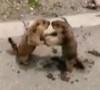 17072016-marmots-s
