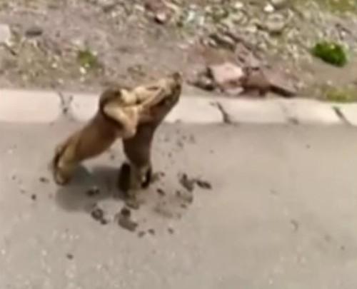 17072016-marmots1