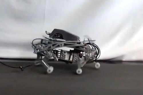 18072016-robotdog2