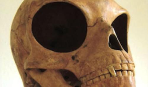 19072016-skull