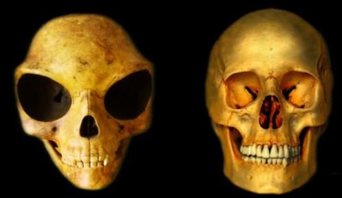 19072016-skull2