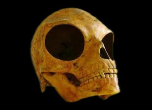 19072016-skull3