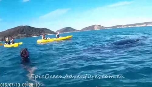 19072016-whale1
