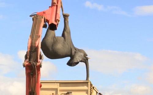 20072016-elephants